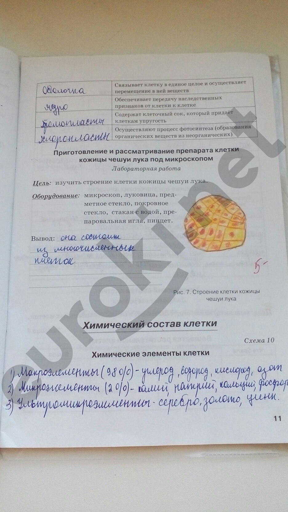 ГДЗ по биологии 5 класс рабочая тетрадь Бодрова. Задание: стр. 11
